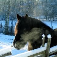 HEST – vinter, dekken og klipping – en utfordring